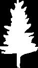 Baum_weiss_beschnitten